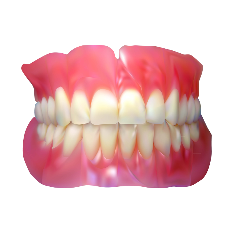 Dentures WIth Gums